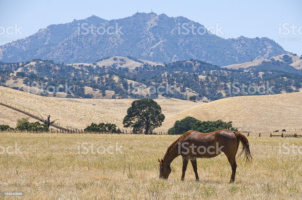 Horse and a Mountain stock photo