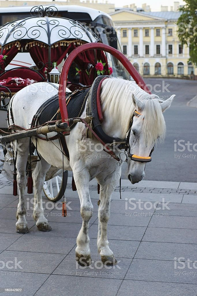 Horse and a vehicle for walks royalty-free stock photo