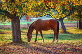 horse enjoying the autumn time in a beautiful scenery