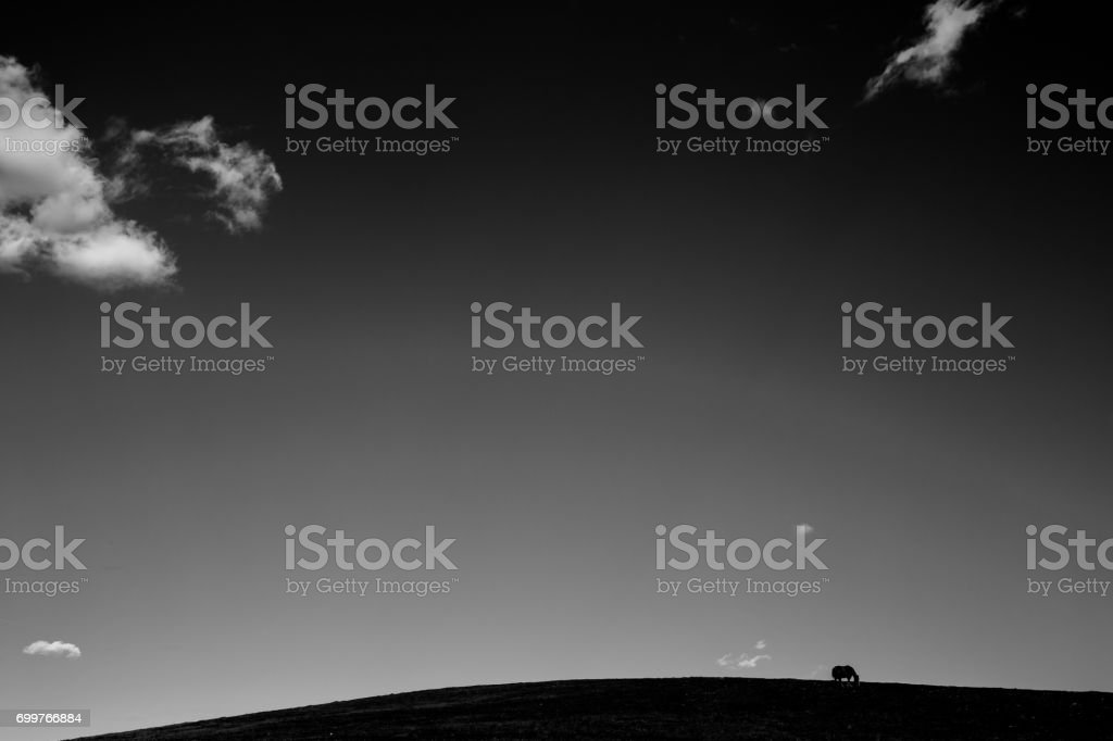 Horse and big sky stock photo