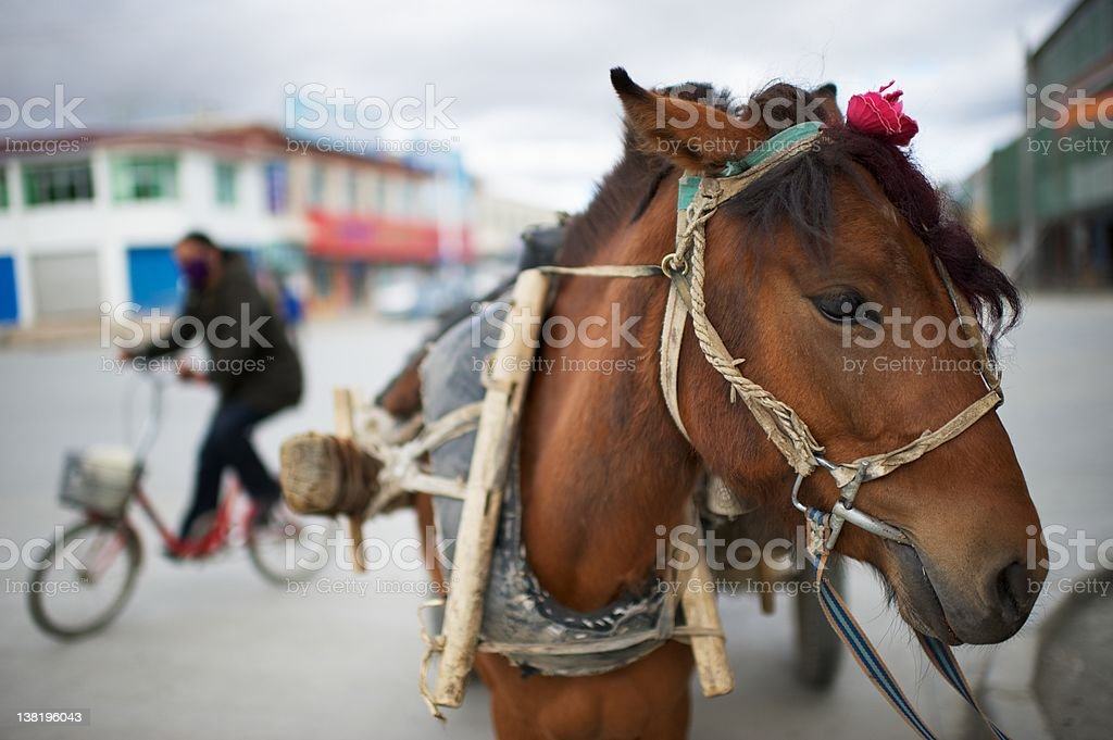 Horse and Bike royalty-free stock photo