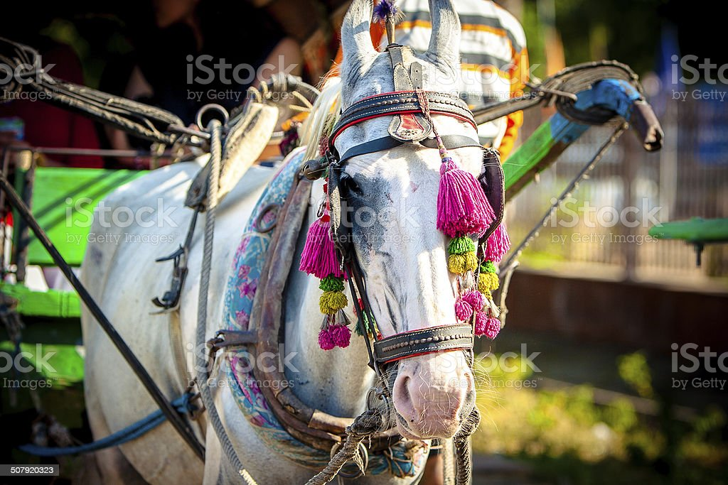 Horse and Buggy in India stock photo