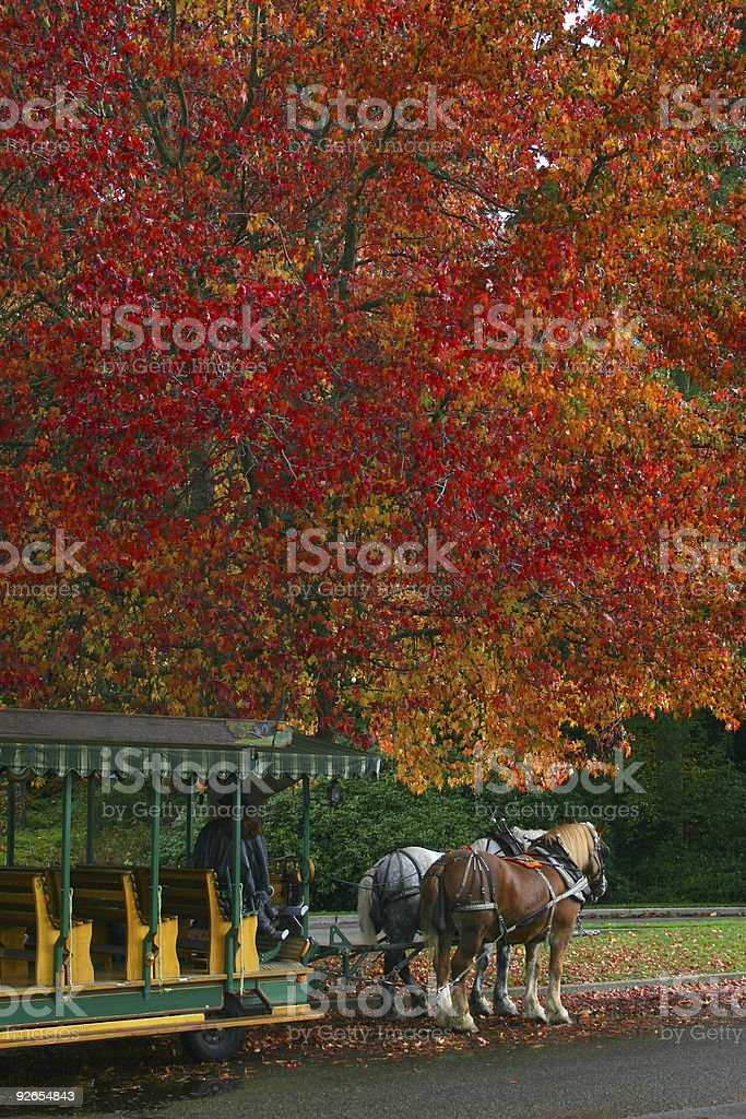 Horse and Buggy royalty-free stock photo
