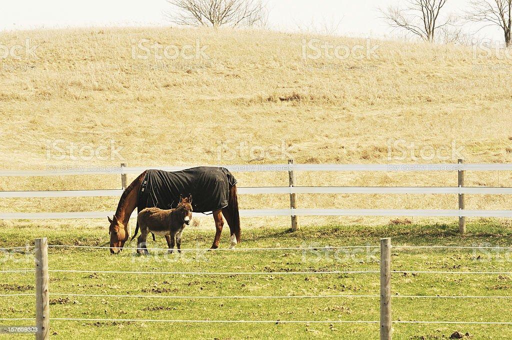 Horse and Burro stock photo