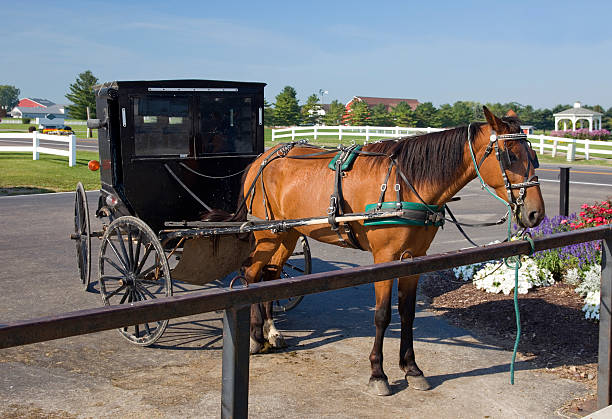 Best Horse Hitching Post Stock Photos, Pictures & Royalty