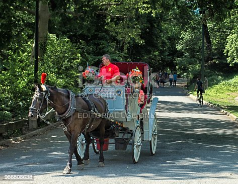 Horse and Carriage, Central Park with tourists on board. There is a movement to ban them, citing animal cruelty as well as being unsanitary filling the streets with faeces.