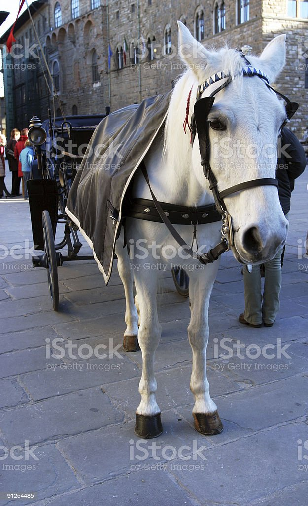 Horse and Carriage, Florence, Italy royalty-free stock photo