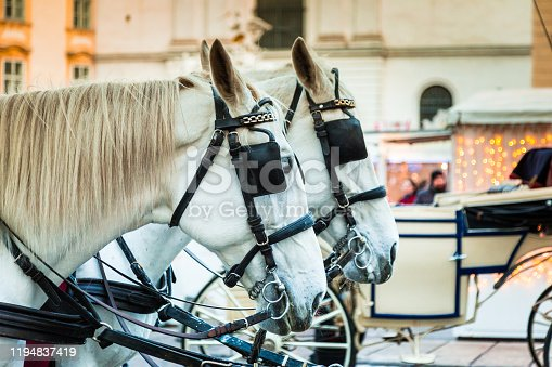 Color image depicting two white horses waiting to embark on a carriage ride for tourists in central Vienna, Austria - the capital city of the country. In the background, defocused, we can see tourists exploring the city and its elegant old architecture.