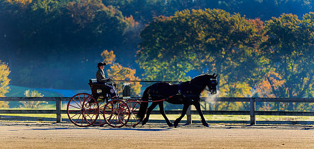 Horse and carriage rider during event stock photo