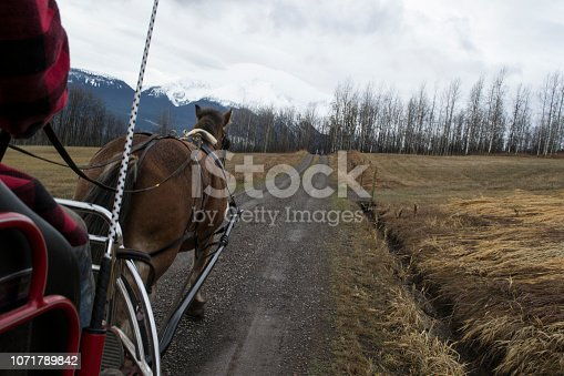 A Clydesdale pulling a carriage in rural British Columbia