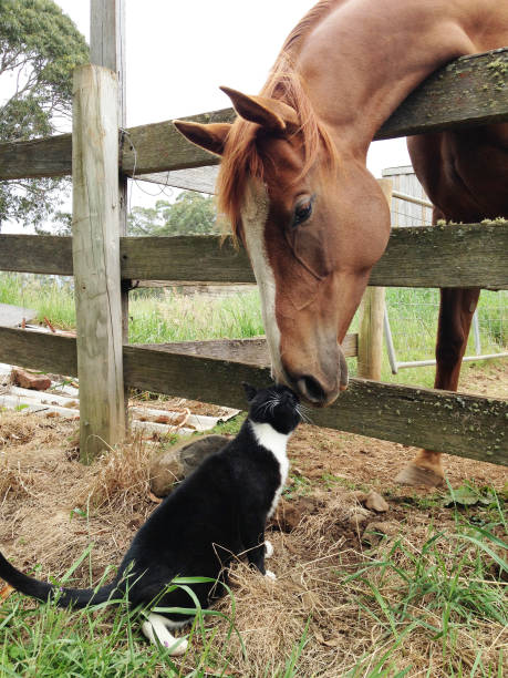 Horse and cat have a good relationship amazing relationship horse and picture id646950312?b=1&k=6&m=646950312&s=612x612&w=0&h=w5bhhapp txjrtjum n65omrlafih7wlhhzjznhmfsy=