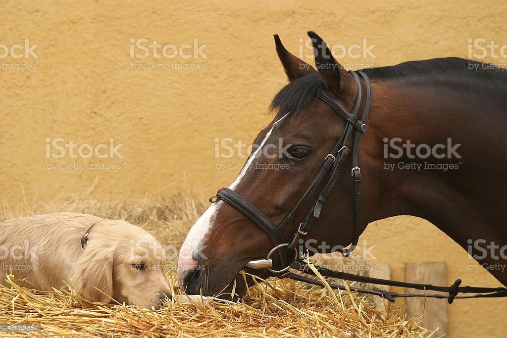 Pferd und Hund ersten Treffen – Foto