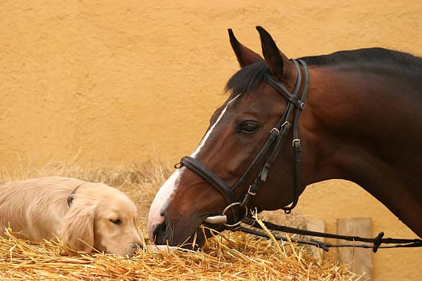 pferd und hund ersten treffen - lustige pferde stock-fotos und bilder