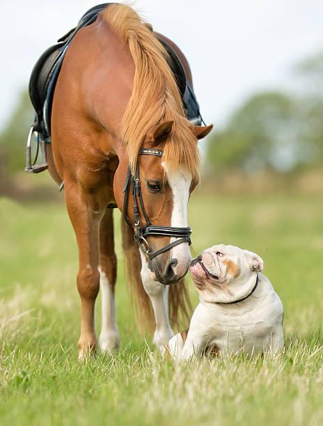 Horse and dog picture id526564928?b=1&k=6&m=526564928&s=612x612&w=0&h=o5g3qdrcp3ni6kwhaiuyjeodvvsbknpmsxjwn8p4skk=