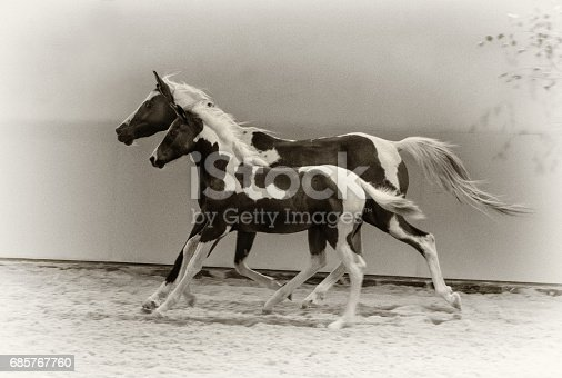 horses and foal galloping - monochrome, sepia, vintage