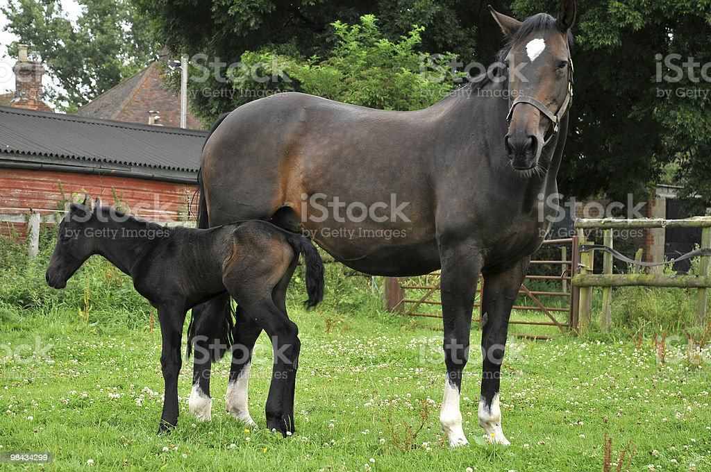 Horse and foal landscape royalty-free stock photo