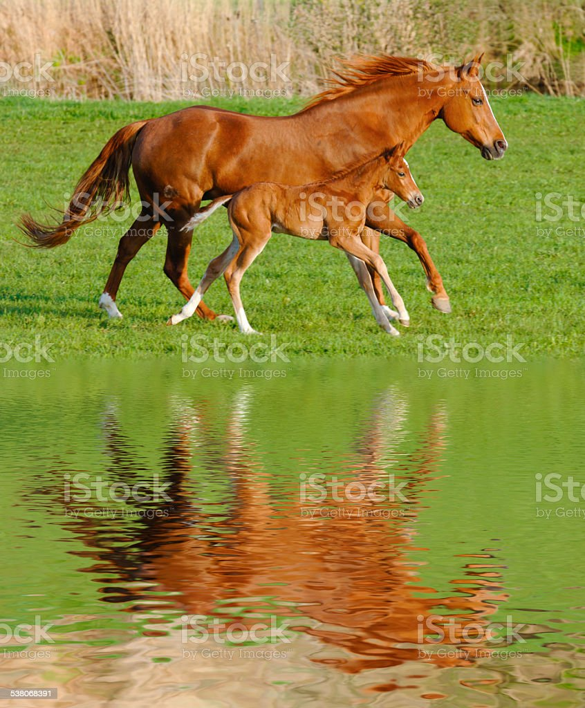 horse and foal stock photo