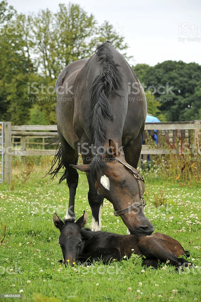 horse and foal royalty-free stock photo