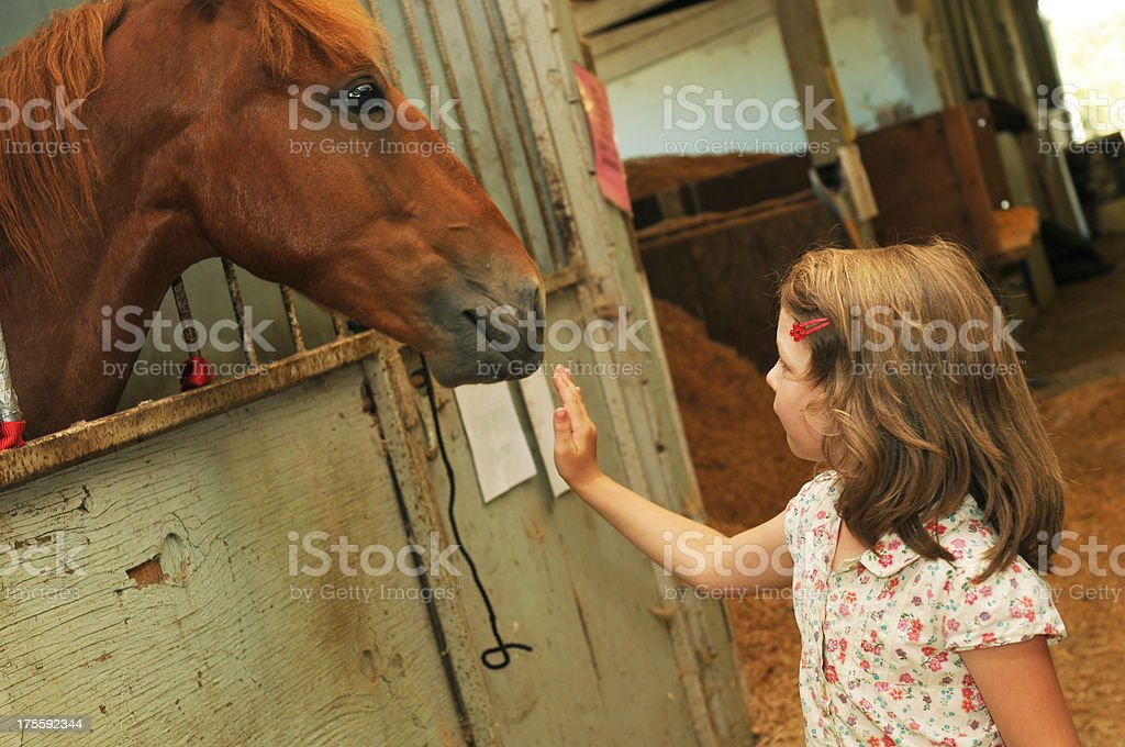Horse and Girl royalty-free stock photo