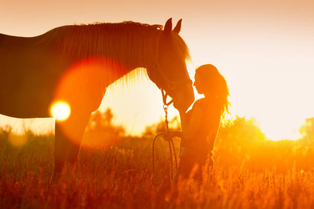 horse and girl silhouette - horse stock pictures, royalty-free photos & images