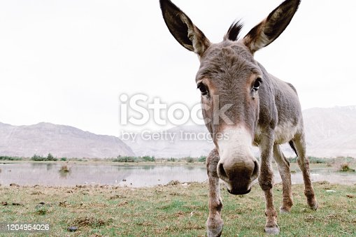Horse and Grey donkey in beautiful landscape Norther part of India