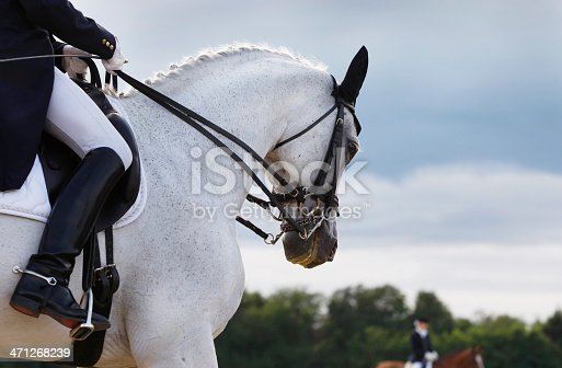 A beautiful grey horse in perfect harmony. Unique light from the Sun. Canon Eos 1D MarkIII.