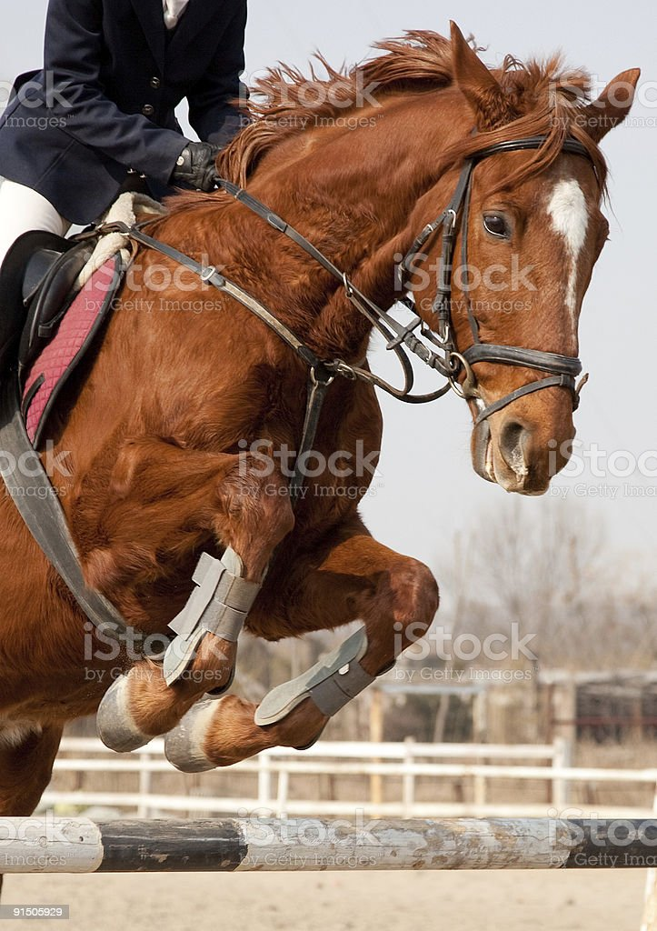 horse and jockey jumping royalty-free stock photo