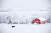 istock Horse and Red Barn in Winter 637839346
