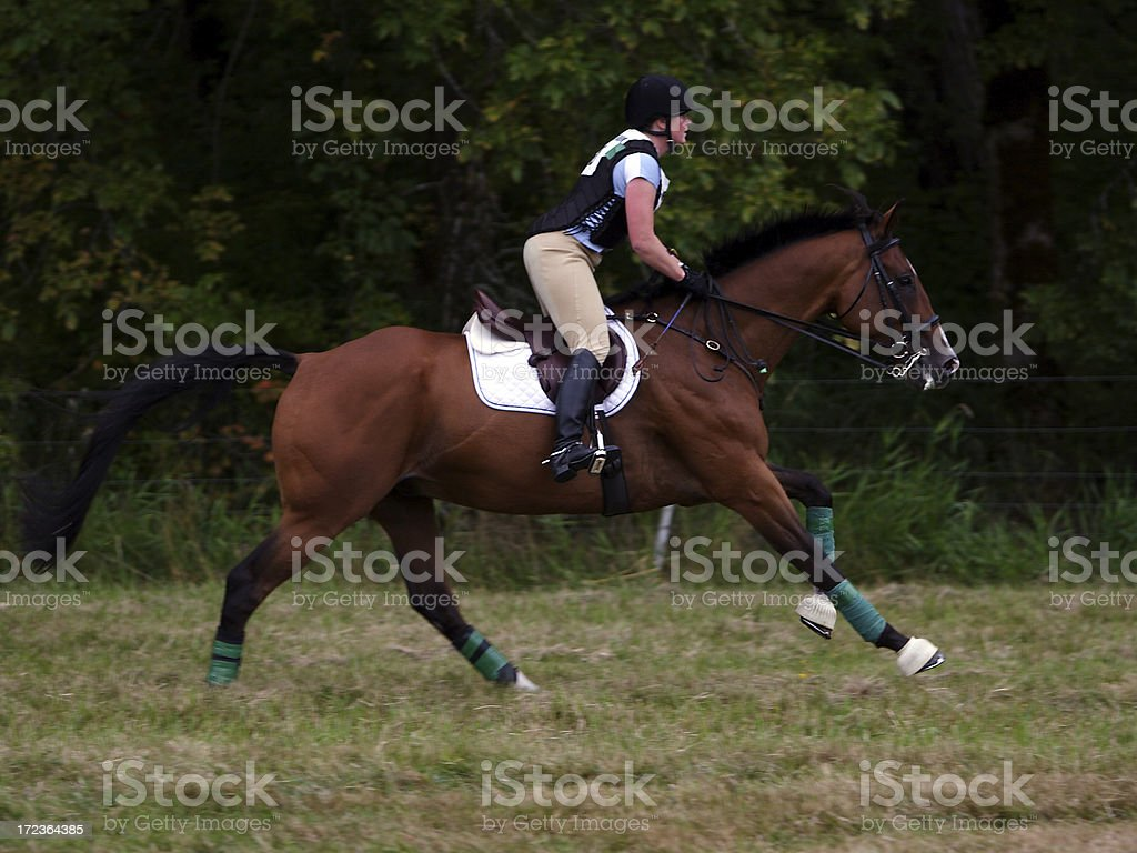 Horse and Rider at the Canter stock photo