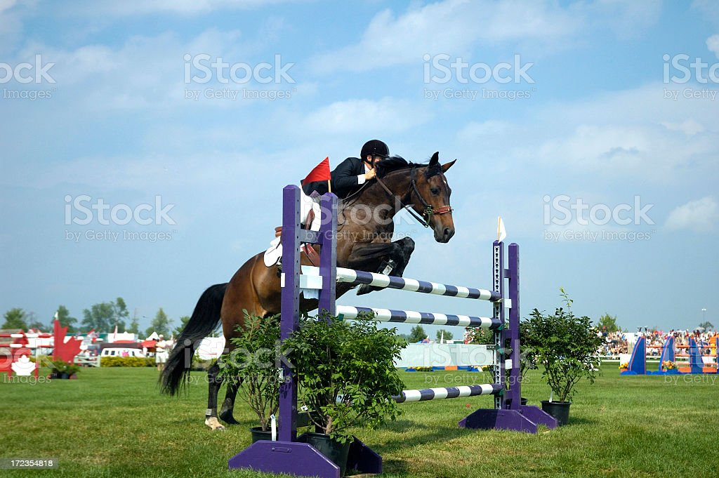 Horse and rider jumping over purple and white striped poles stock photo