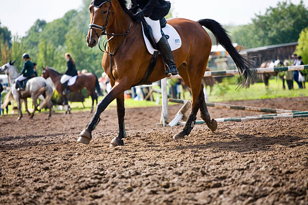 horse and rider - horse bit stock pictures, royalty-free photos & images
