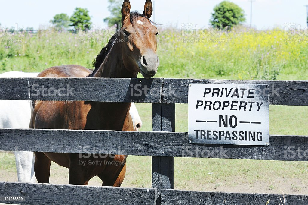 Horse and Sign stock photo