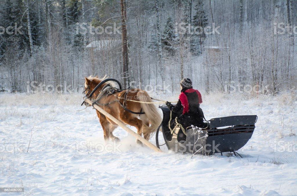Horse and sleigh stock photo