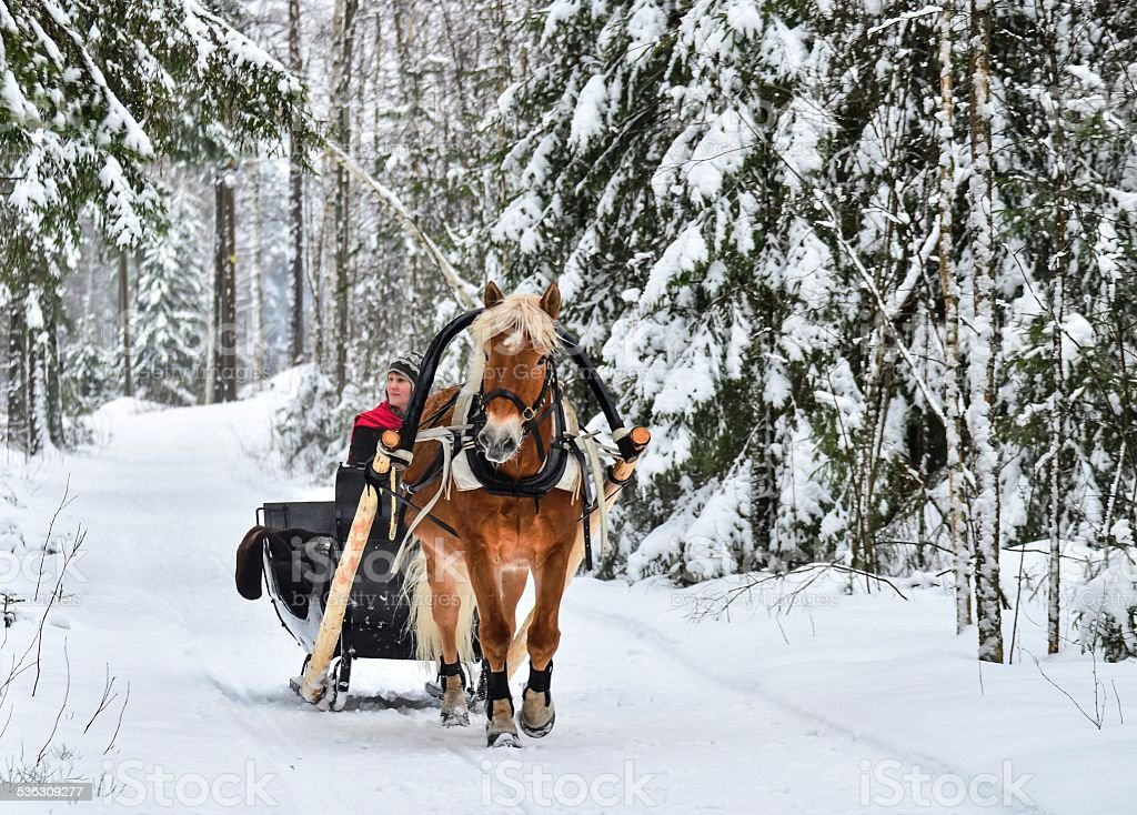 Horse and sleight stock photo