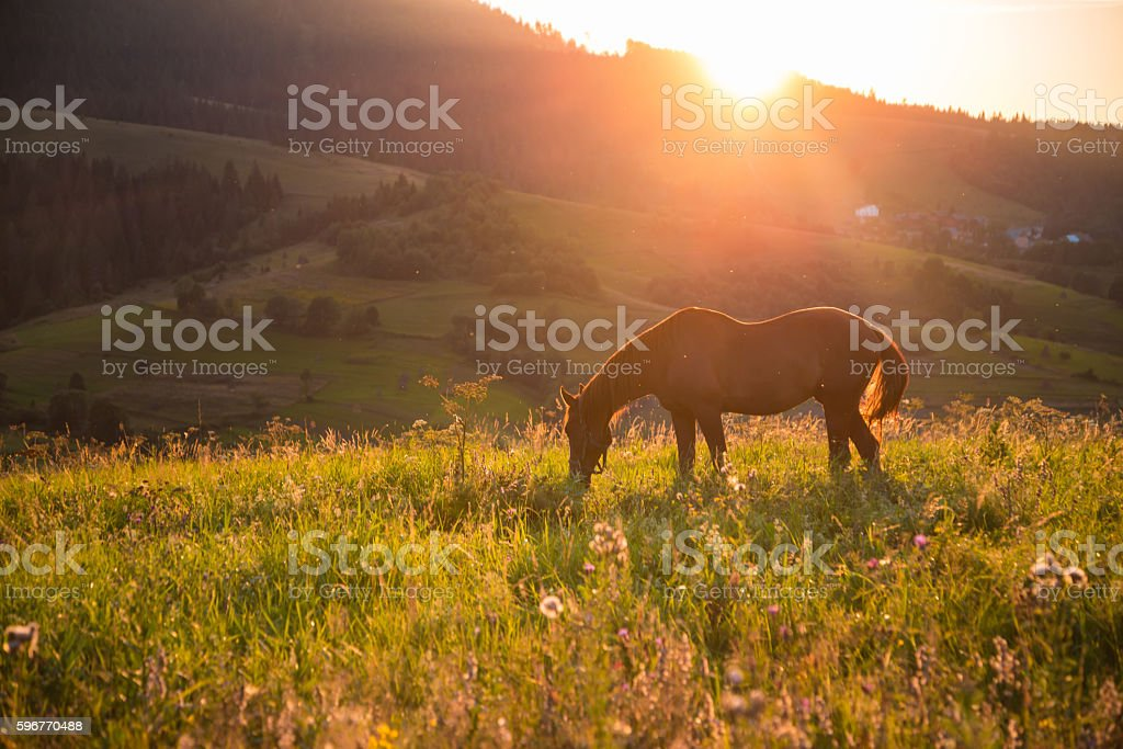 horse and sunset stock photo