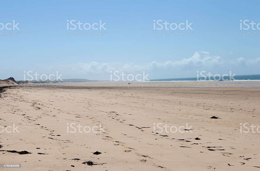 Horse and the ocean royalty-free stock photo