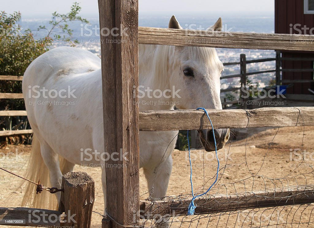 Horse and Wooden fence royalty-free stock photo