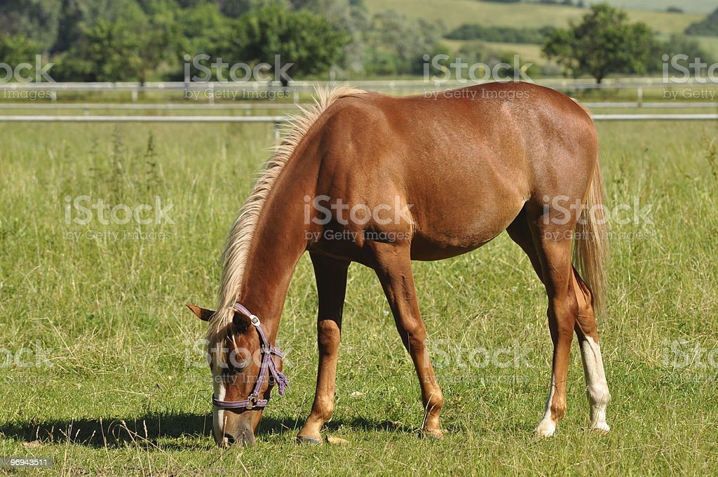 horse at grass royalty-free stock photo