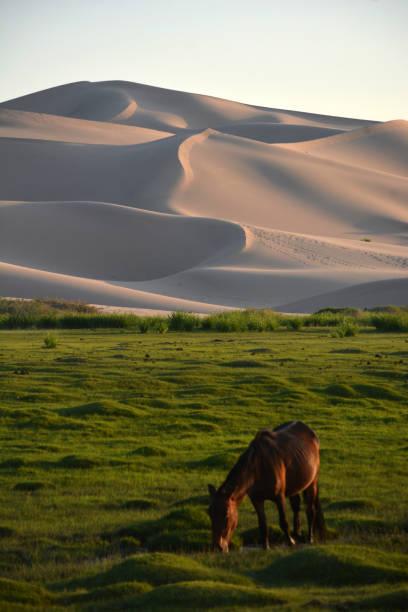 Horse at Khongor Sand Dunes, Mongolia stock photo