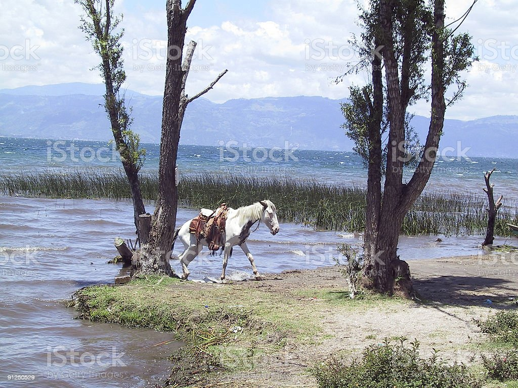 Horse at Lake Atitlan Guatemala stock photo