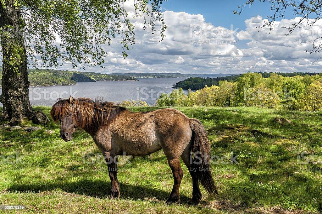 Horse at Lygnern in Halland, Sweden stock photo