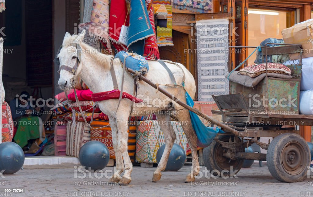 Horse at Medina historical District in Marrakech in Morocco stock photo