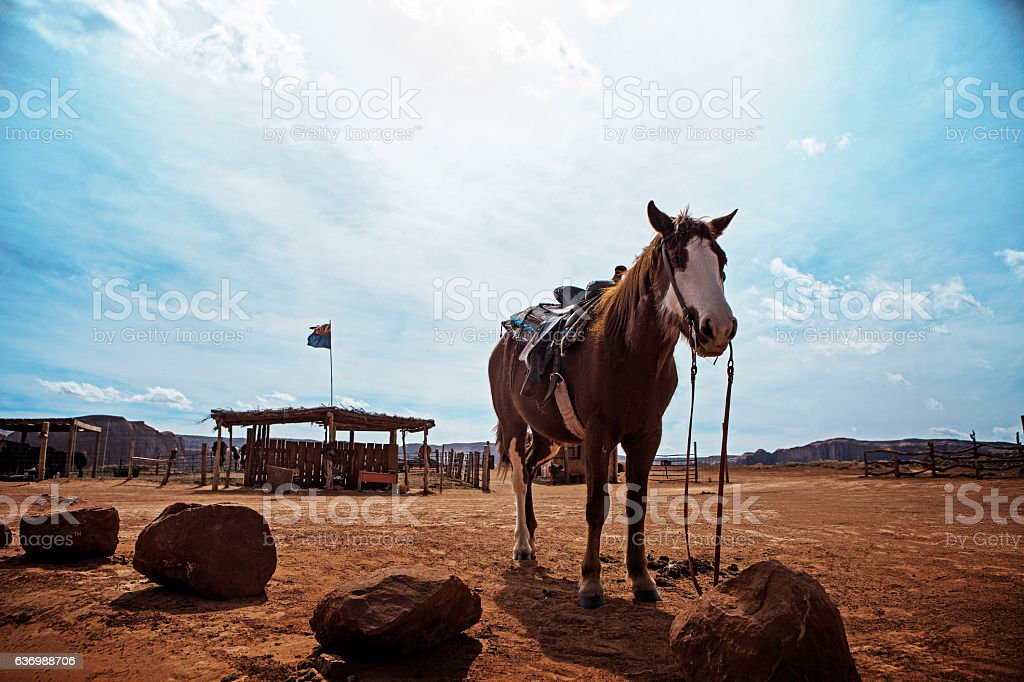 Horse at Monument Valley - United States of America stock photo