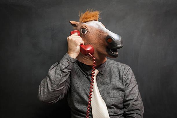 pferd im büro - lustige pferde stock-fotos und bilder