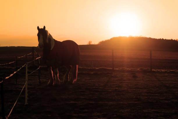 A horse at sunrise stock photo