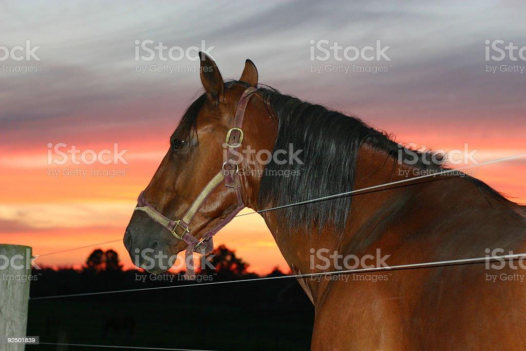 Horse at sunset royalty-free stock photo