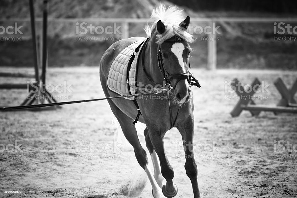 horse at the races stock photo