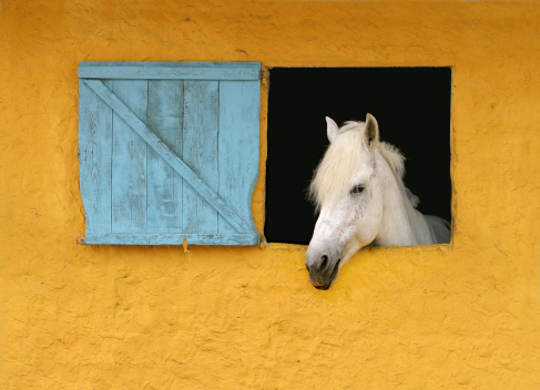 Horse at Window in Yellow
