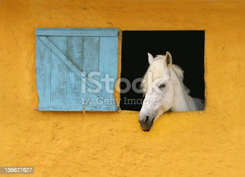 Young white horse looking out of a window. Yellow door and blue shutter