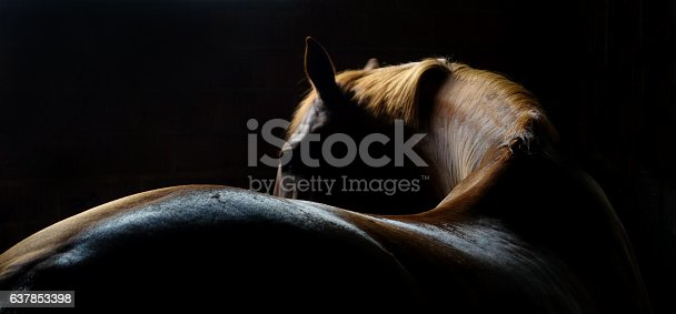A sinuous image of a horse's back and mane and head.